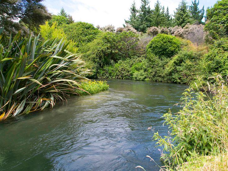 Waitahanui River - Access at the end of the road