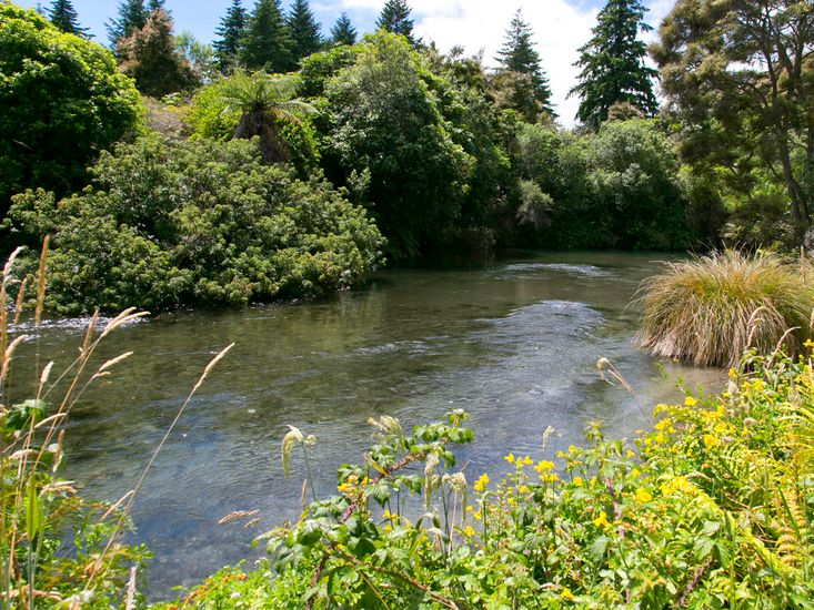 Waitahanui River - Access at the end of the street
