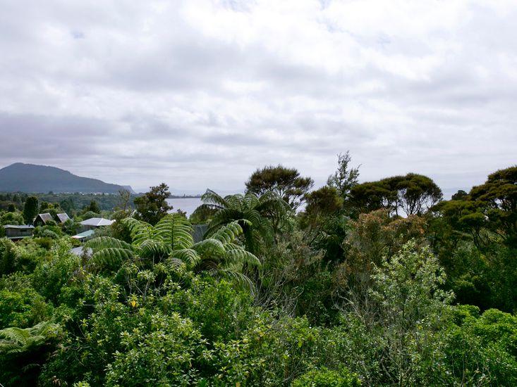 Bush and Lake Views