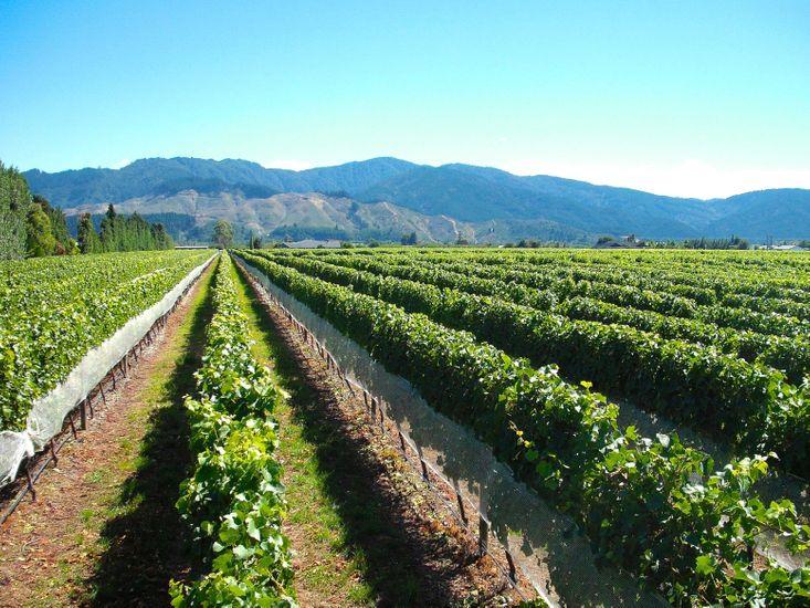 Marlborough Magic - Rapaura Holiday Home - Vineyard Views