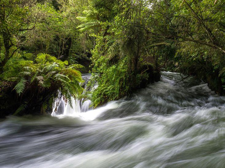 Okere Falls - Local Attraction