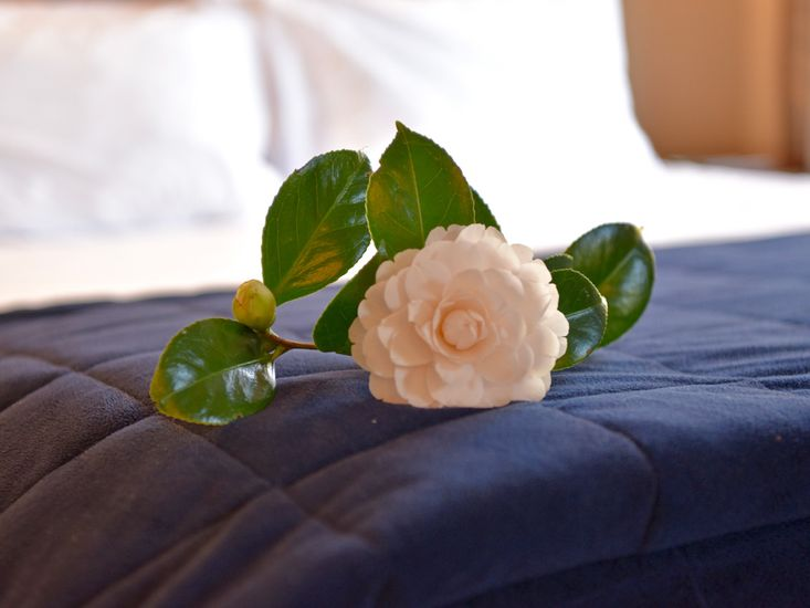 Bed - Close Up
