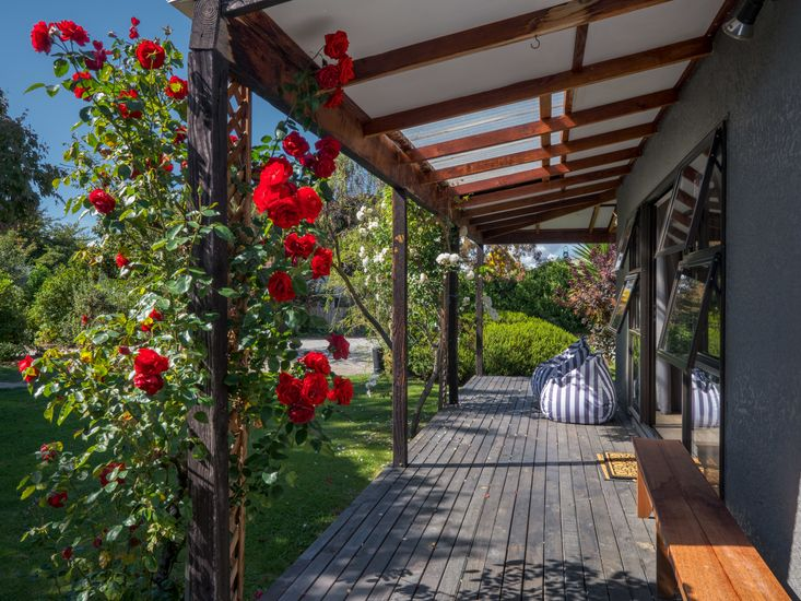 Roses on the surrounding decking