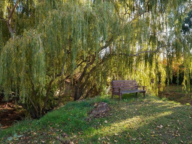 Read a book under the Willow tree