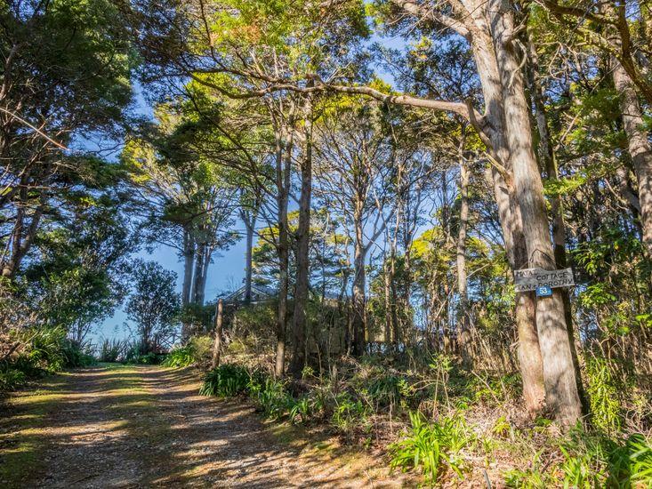 Driveway and surrounding native bush