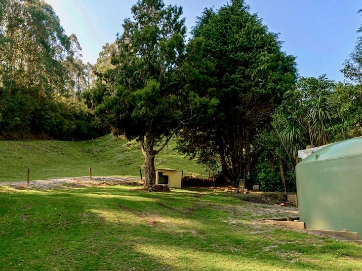Lush green back yard